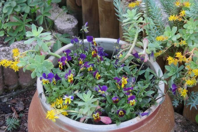 un clin d'oeil dans mon jardin  Img_2949