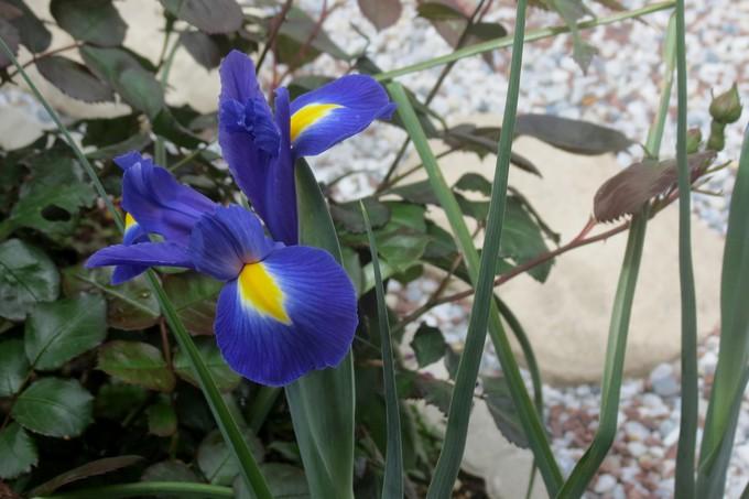 un clin d'oeil dans mon jardin  Img_3024