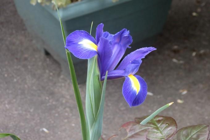 un clin d'oeil dans mon jardin  Img_3025