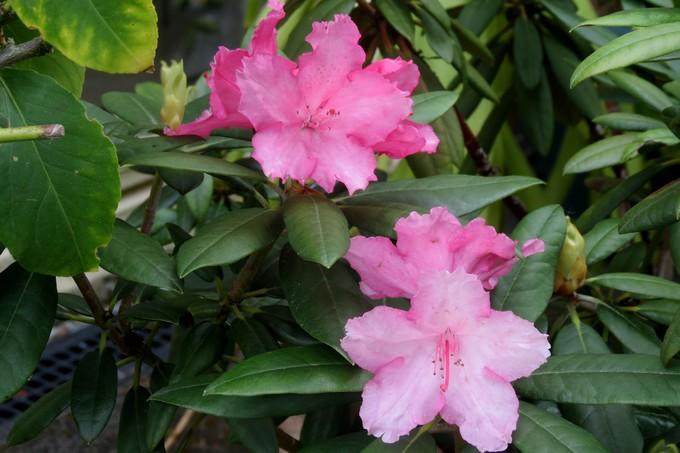 un clin d'oeil dans mon jardin  Img_3027