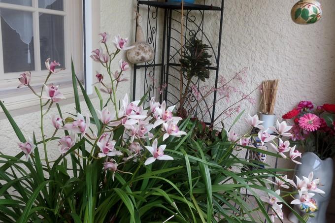 un clin d'oeil dans mon jardin  Img_3028
