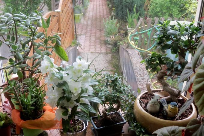 un clin d'oeil dans mon jardin  Img_3033