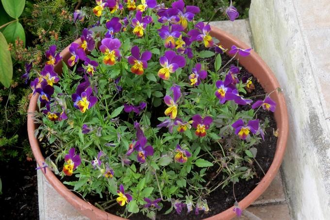 un clin d'oeil dans mon jardin  Img_3038