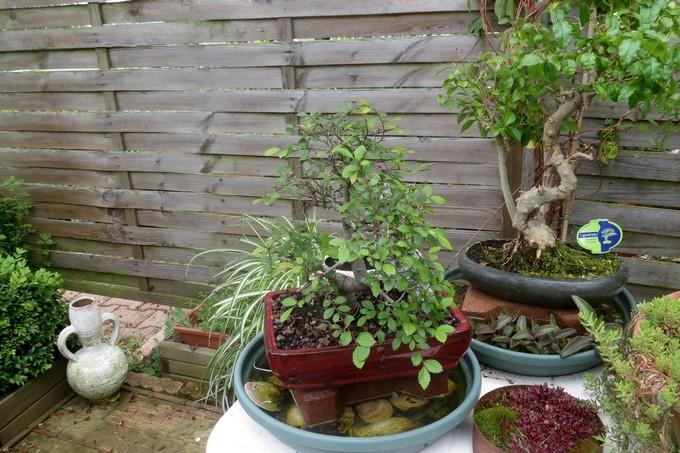 un clin d'oeil dans mon jardin  Img_3039