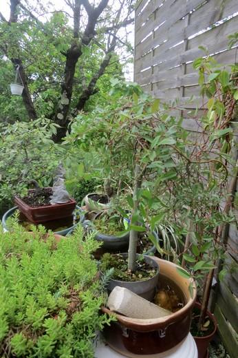 un clin d'oeil dans mon jardin  Img_3041