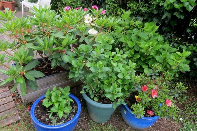 un clin d'oeil dans mon jardin  Img_3042