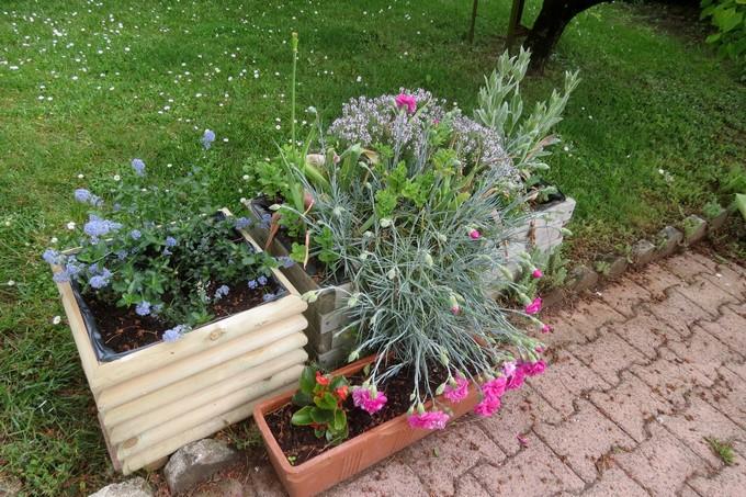 un clin d'oeil dans mon jardin  Img_3044
