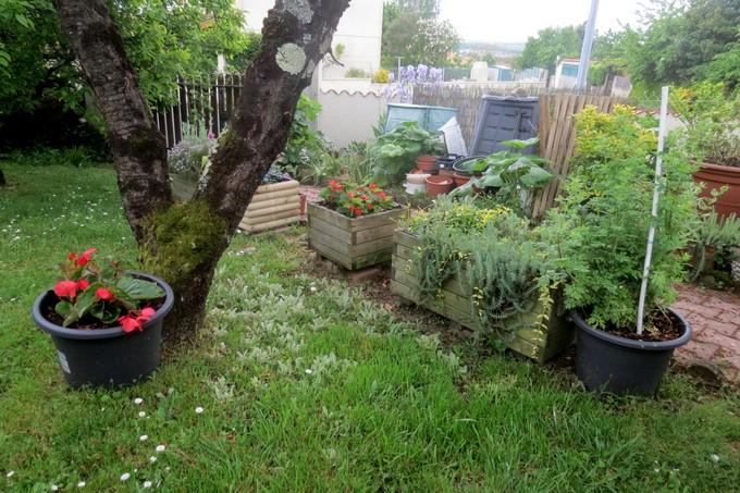 un clin d'oeil dans mon jardin  Img_3111