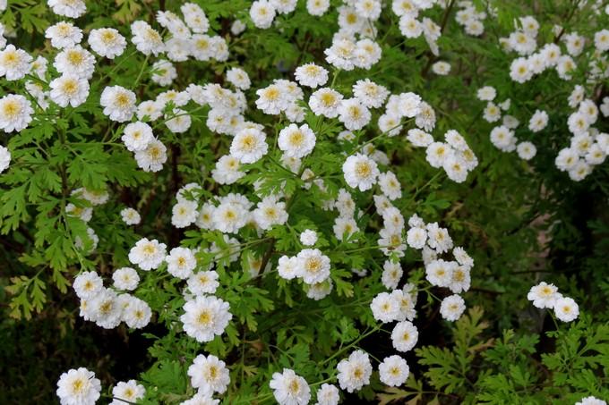 un clin d'oeil dans mon jardin  Img_4510