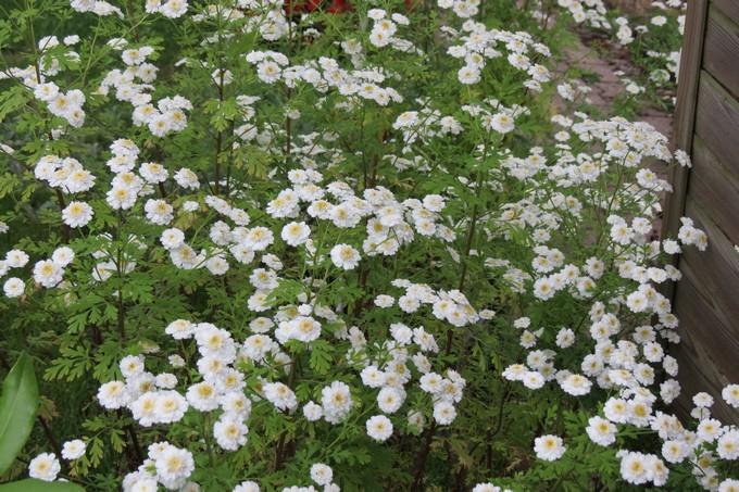 un clin d'oeil dans mon jardin  Img_4511