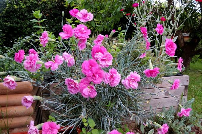 un clin d'oeil dans mon jardin  Img_4513