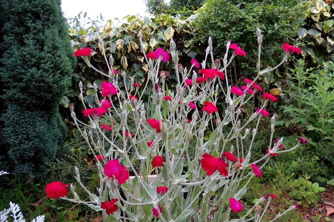un clin d'oeil dans mon jardin  Img_4515