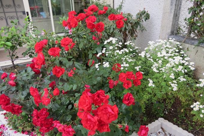 un clin d'oeil dans mon jardin  Img_4516