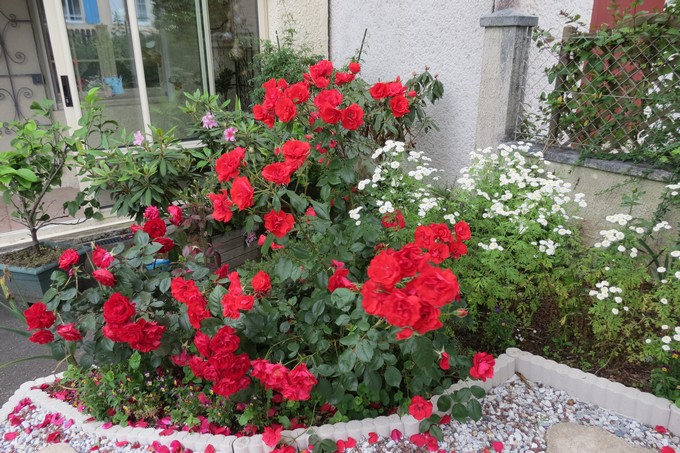 un clin d'oeil dans mon jardin  Img_4517