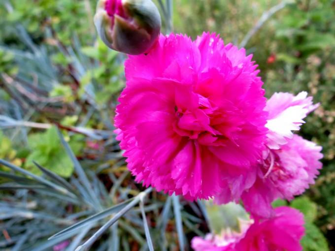 un clin d'oeil dans mon jardin  Stc_4510