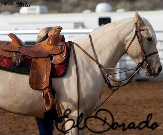Chevaux de propriétaires [11 chevaux] El_dor11
