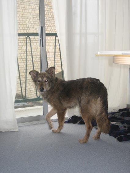 Nos loups grandissent, postez nous vos photos - Page 3 Untitl10