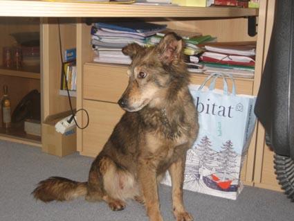 Nos loups grandissent, postez nous vos photos - Page 3 Untitl11