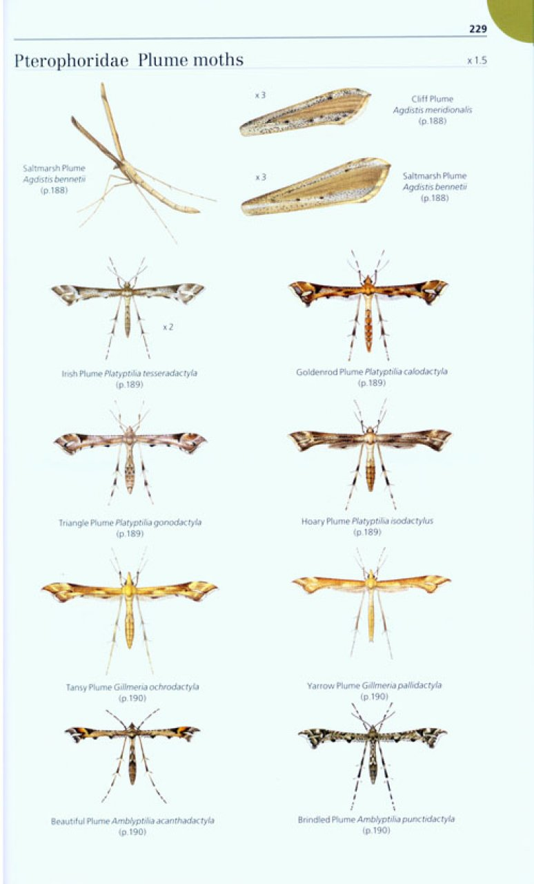Field Guide to the Micro-Moths of Great Britain and Ireland Microm10