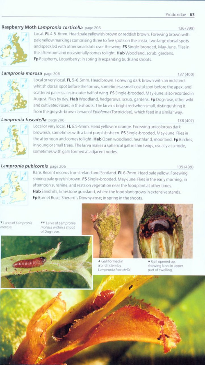 Field Guide to the Micro-Moths of Great Britain and Ireland Microm12