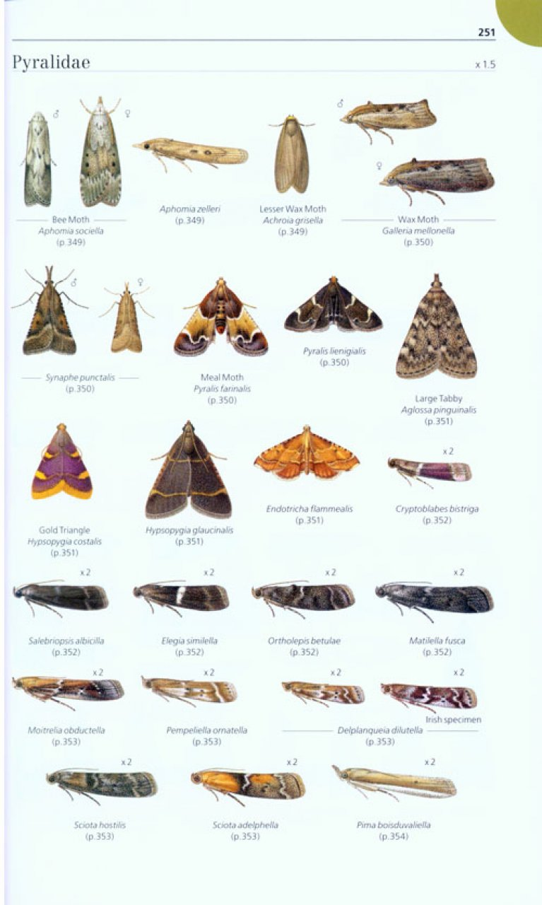 Field Guide to the Micro-Moths of Great Britain and Ireland Microm13