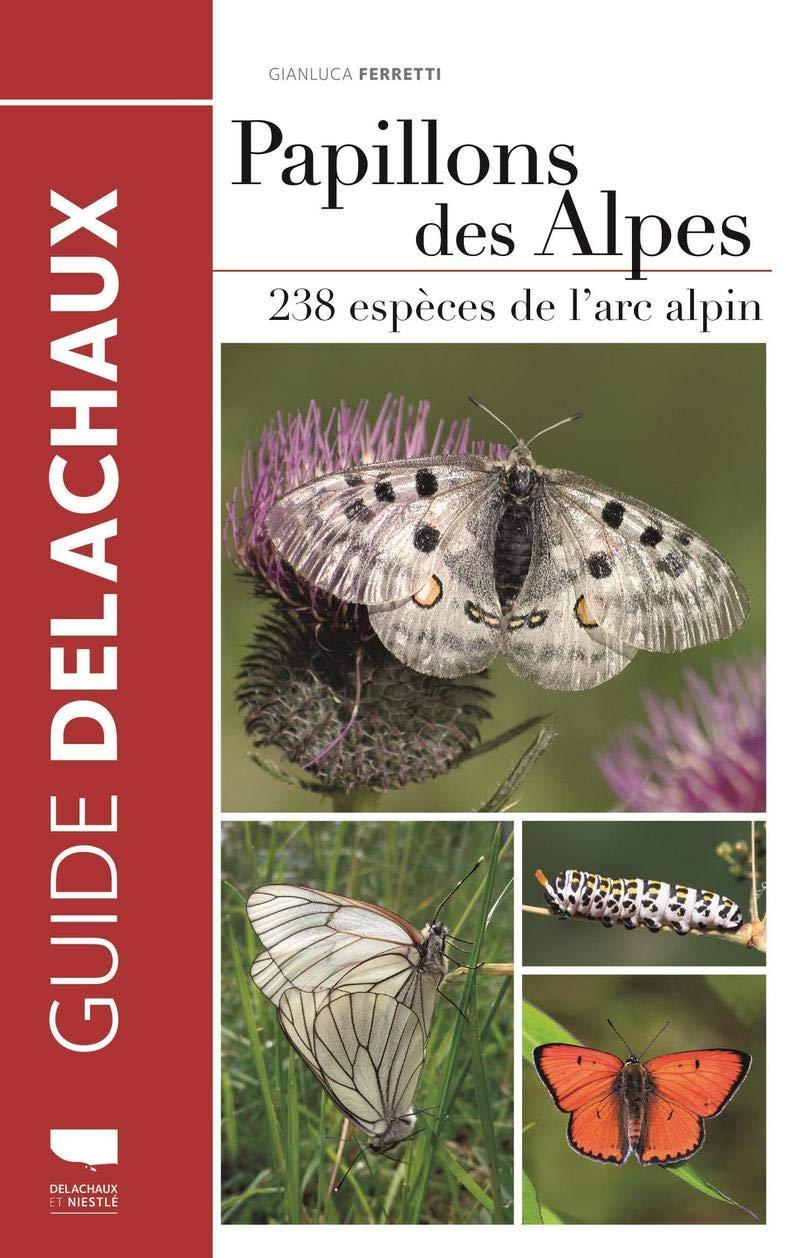 Papillons des Alpes Papill10