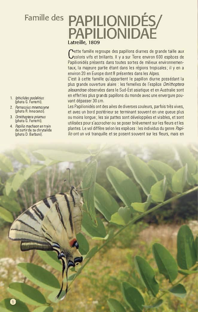 Papillons des Alpes Papill11