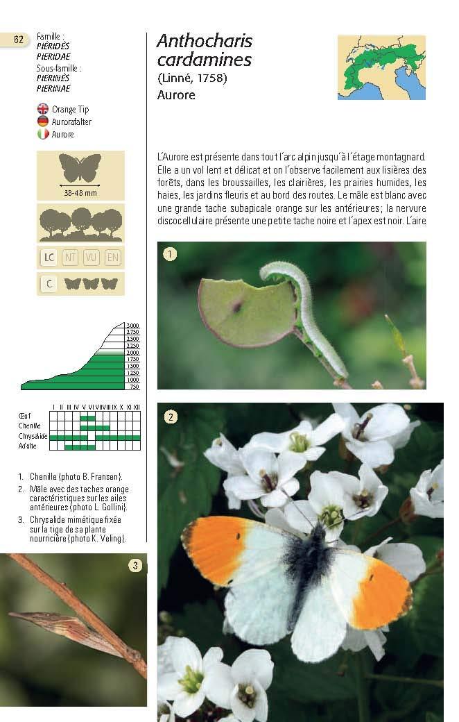 Papillons des Alpes Papill12