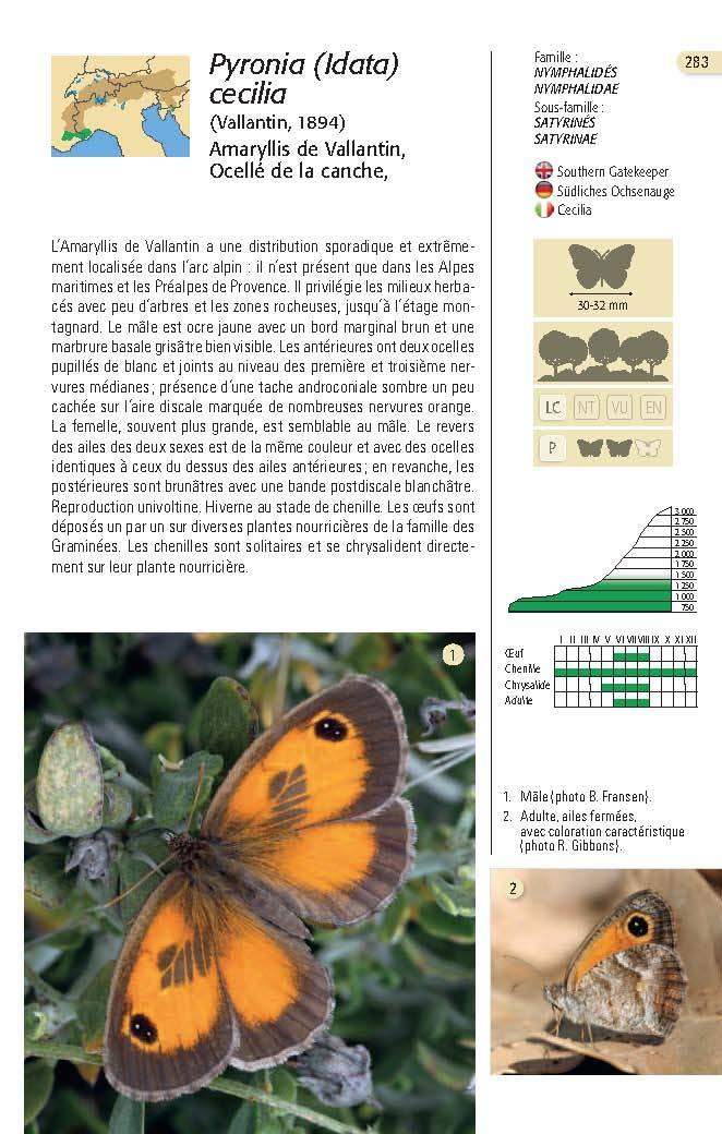 Papillons des Alpes Papill13