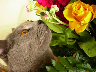21 Thème - Félinotechnie : l'odorat Odeur-11