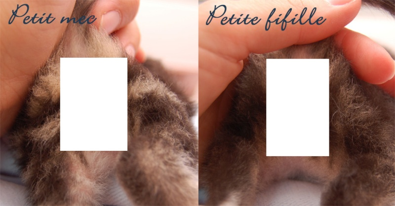 Sexe du chaton : mâle ou femelle - Page 2 Sexech10