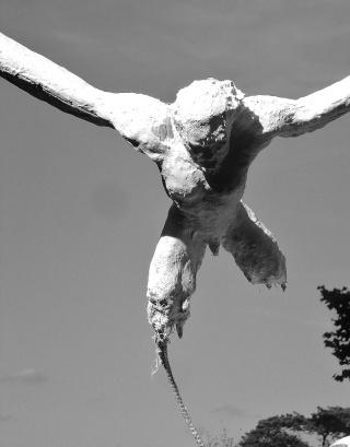 """projet Joaquin """"voler de ses propres ailes"""" Foruma10"""