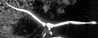 """projet Joaquin """"voler de ses propres ailes"""" Foruma11"""
