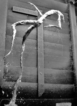 un homme qui tombe (plâtre) Novemb14