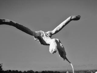 """projet Joaquin """"voler de ses propres ailes"""" Oooooo10"""