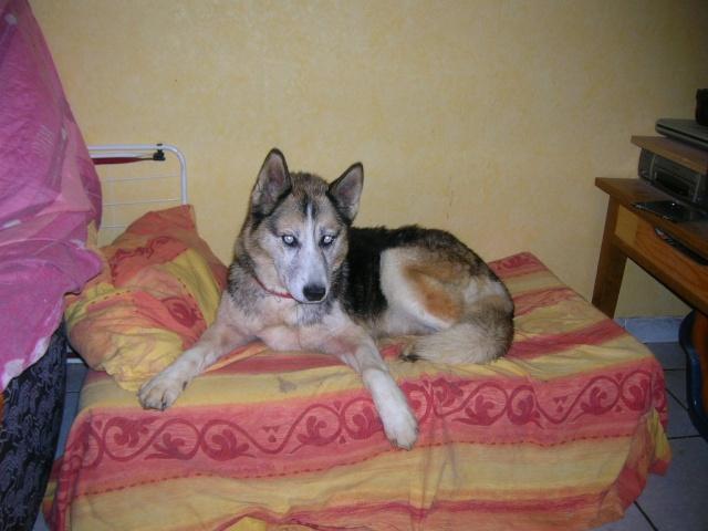 luciolle femelle husky plus de 8 ans ( 80) - Page 4 Dscn9615