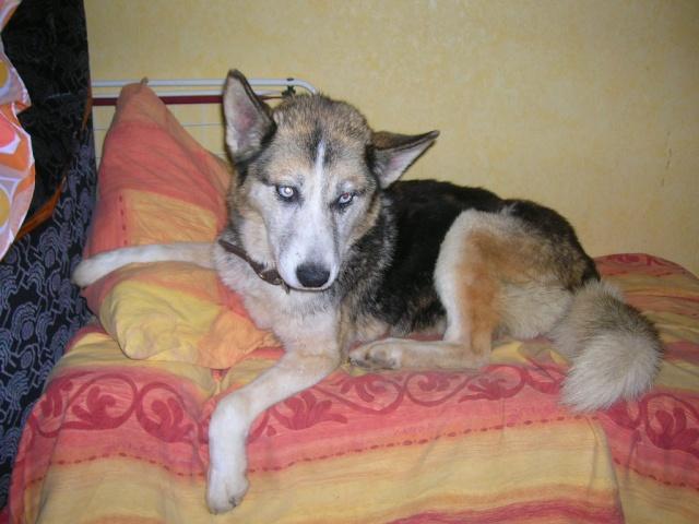 luciolle femelle husky plus de 8 ans ( 80) - Page 5 Dscn9813