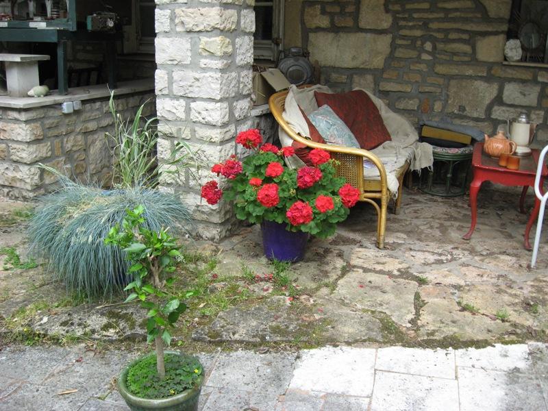 bonjour de mon jardin sous la chaleur Img_5815