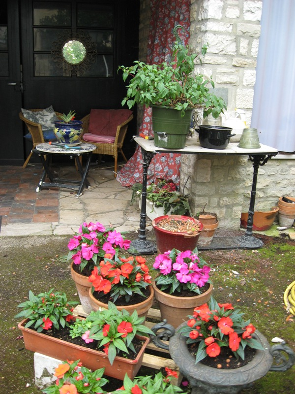 bonjour de mon jardin sous la chaleur Img_5816