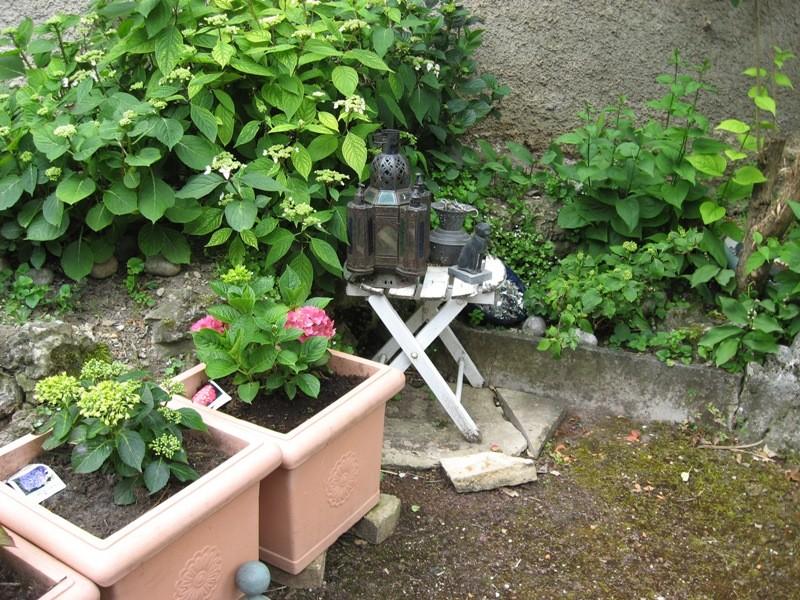 bonjour de mon jardin sous la chaleur Img_5817