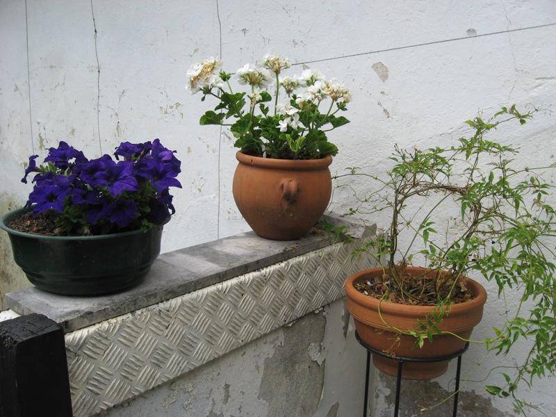 bonjour de mon jardin sous la chaleur Img_5830