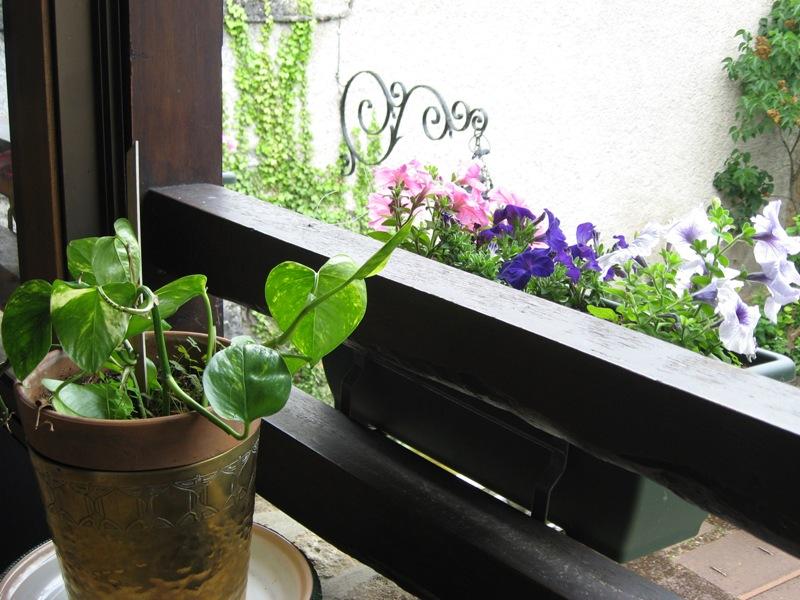 bonjour de mon jardin sous la chaleur Img_5831