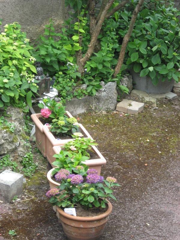 bonjour de mon jardin sous la chaleur Img_5832