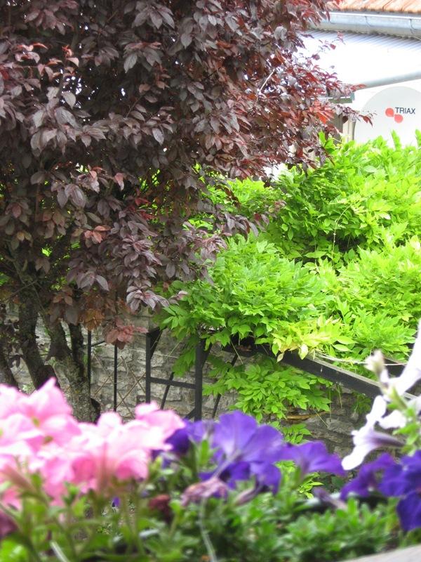 bonjour de mon jardin sous la chaleur Img_5833