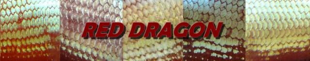Plakats dragons...3 couleurs Ecaill13