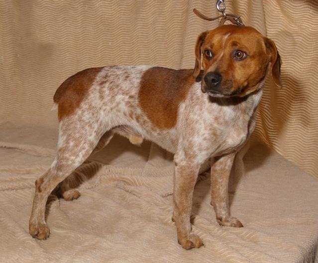 CHICO retour à l'adoption après décès Chico10