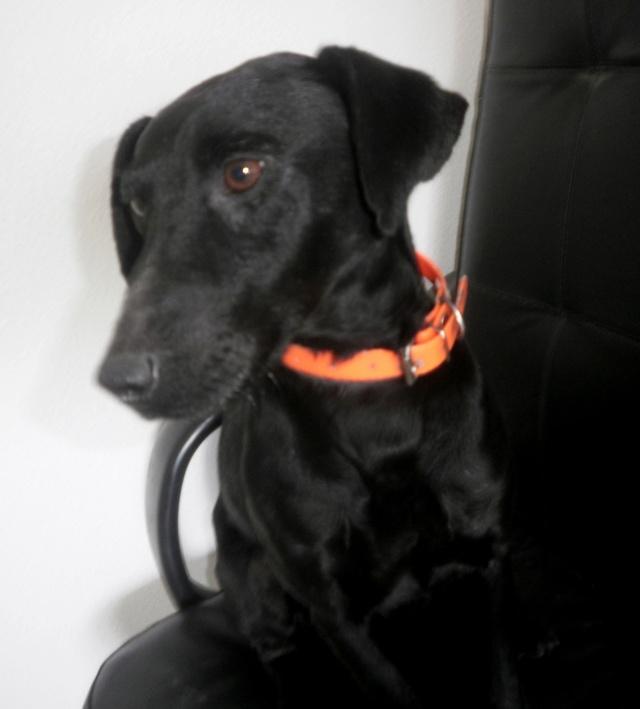 Jagd terrier 2 ans urgence fourrière 6 juin P5060010