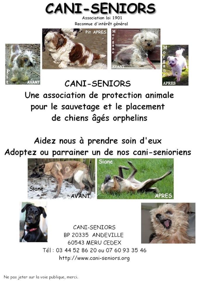 Cani seniors  Cani_s10