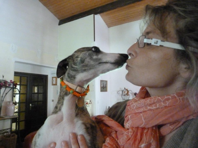 Collier  d'interieur shamballa pour chien  Collie18