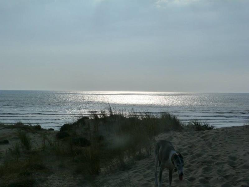 Le soleil était là !!!! Ocean_57